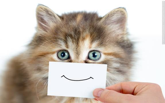 Do animals have emotions essay