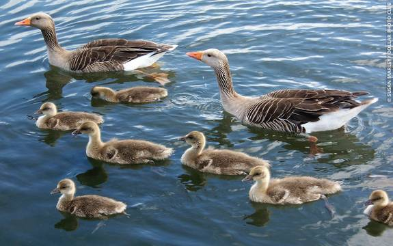 Imprinting and Relationships - Psychologist World